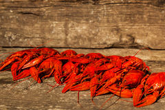 Cancers to beer, boiled crawfish, beer snacks Royalty Free Stock Photo