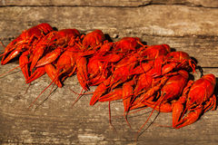 Cancers to beer, boiled crawfish, beer snacks Stock Image