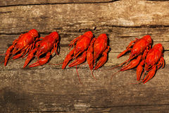 Cancers to beer, boiled crawfish, beer snacks Royalty Free Stock Photos
