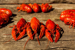 Cancers to beer, boiled crawfish, beer snacks Royalty Free Stock Image