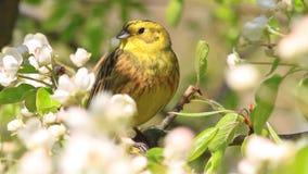 Canción de un pájaro hermoso de las flores almacen de metraje de vídeo