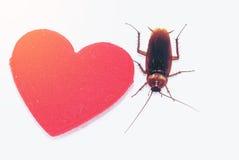 Cancrelat avec le foyer rouge, concept d'amour Photos libres de droits