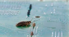 Cancrelat sur les microcircuits d'ordinateur Concept des Bu d'ordinateur images libres de droits