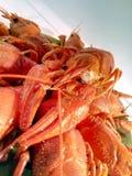 Cancro del fiume, spuntino dell'aragosta, piatto gastronomico fotografia stock