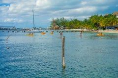 CANCUN, МЕКСИКА - 10-ОЕ ЯНВАРЯ 2018: Неопознанные люди плавая в mujeres красивых карибских isla пляжа с чистым Стоковые Фото
