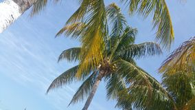 Cancun coconuts Royalty Free Stock Photos