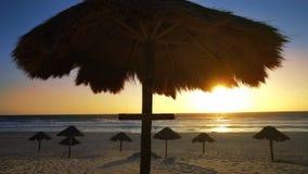 Cancun delfinesstrand i karibisk Riviera Maya arkivfilmer