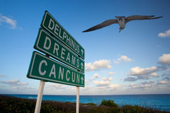 Cancun dreams. Cancun, dreams and delphinus signs and seagull in the caribbean Stock Photos