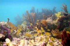 cancun koralowy majski Mexico rafowy Riviera Obrazy Stock
