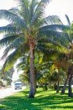 Cancun Kukulcan boulevard palm trees Stock Photos