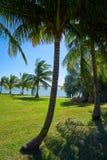 Cancun Pok-Ta-Pok area in Hotel Zone. Cancun Pok-Ta-Pok palm trees in Hotel Zone at Nichupte Lagoon of Mexico stock image