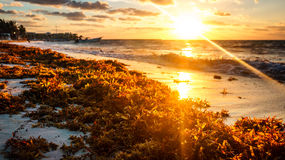 Cancun strandsoluppgång Royaltyfri Fotografi