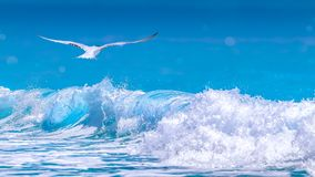 Cancun beach with blue water and a birds in flight. Cancun waves hitting the beach while a seagull flies over the water Stock Photography