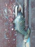 Candado en forma de los pescados Fotos de archivo