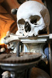 candelabrumskalle royaltyfri foto