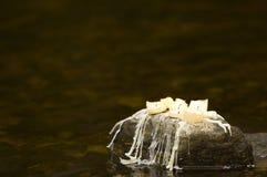Candels som sitter på rock med julgarneringar Royaltyfri Foto