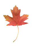 Candian flag symbol. Canadian flag simbol - maple leaf royalty free stock image