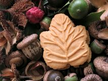 Candian maple cookie surrounded by autumn nature   Save Download Preview Candian maple cookie surrounded by autumn nature. One Canadian maple cream cookie Stock Photography