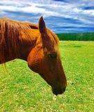 Candid horse Stock Photography