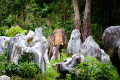 Candid picture of the elephant in the jungle Royalty Free Stock Photography