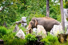 Candid picture of the elephant in the jungle Stock Photo