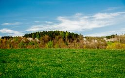 Candid view on natural meadow and forest royalty free stock photos
