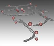 Candida albicans Stockbild