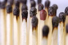 Candidate matches. Burnt matches with an intact one Royalty Free Stock Photos