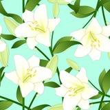 candidum的百合属植物,圣母百合或者白百合在绿色薄荷的背景 库存图片
