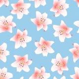 Candidum Lilium, den Madonna liljan eller rosa färglilja på ljus - blå bakgrund också vektor för coreldrawillustration vektor illustrationer