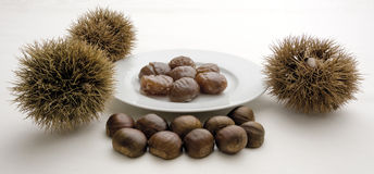 Candied chestnut and spiky cupule Royalty Free Stock Images