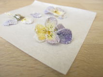 Candied horned pansy. With sugar and white egg royalty free stock photo