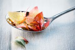 Candied rose petals. On spoon royalty free stock images