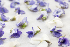 Candied violets Stock Photos