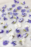 Candied violets Royalty Free Stock Photo
