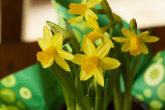 Candies, Strawberries and Daffodils. Daffodils in a green wrapping placed on a table Royalty Free Stock Images