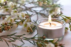 Candle and blossom Stock Images