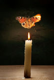 Candle and butterfly Royalty Free Stock Photos