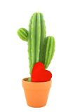 Candle cactus. With red heart on white background isolated stock photography
