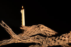Candle and Cholla Royalty Free Stock Photography