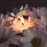 Candle and daisies Royalty Free Stock Photos