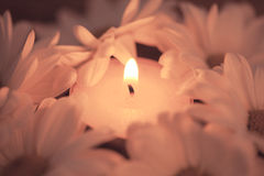 Candle and daisies Stock Images