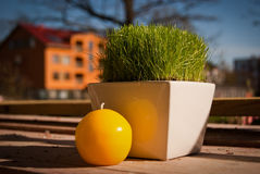 Candle and first grass. Grass in the pot, put outside in the spring sun Royalty Free Stock Image