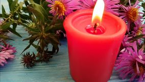 Candle flower chrysanthemum slow motion relaxation stock footage
