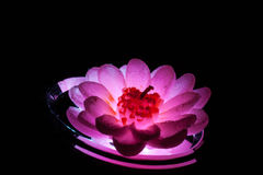 Candle flower on the lamp. Royalty Free Stock Images