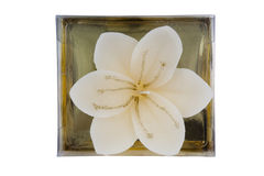 Candle - flower shape Stock Photo