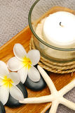 Candle with frangipani flowers stock images