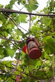 Candle lantern hanging from tree branch stock images