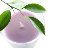 Candle and leaf. Beautiful pink candle and green leaves stock photography