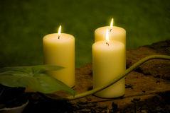 Candle Light. Pure light from candles with a good contrast with green leaves Stock Photos